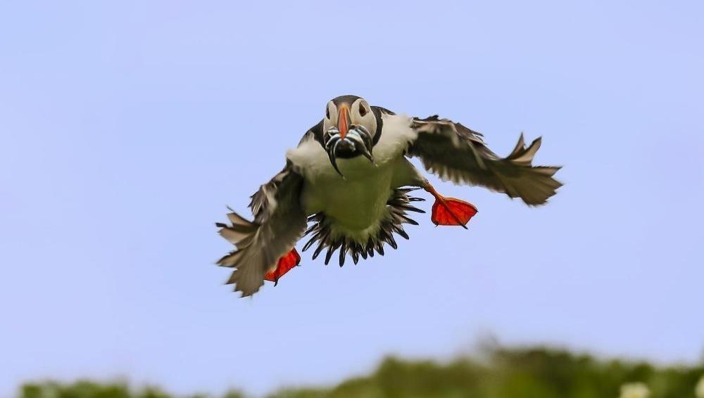 大開眼界—群英飛羽世界野鳥攝影聯展(免費參觀)